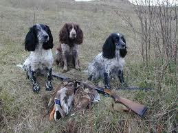 Охотничьи породы собак, Блог о собаках